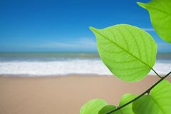 Green leaf on beach Royalty Free Stock Image