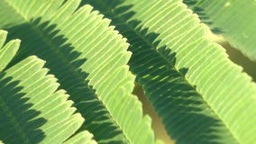 Green leaf. Beautiful natural light stock footage