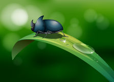 A green leaf with a beetle Royalty Free Stock Photo