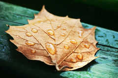 Green leaf on a bench. Dried leaf on the green bars wooden benches Royalty Free Stock Photography