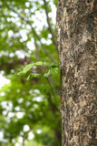 Green leaf on big tree Stock Images