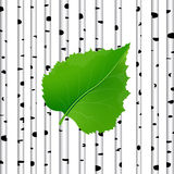 Green leaf in a birch background Royalty Free Stock Image