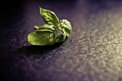 Green Leaf on Black Ground Stock Photography