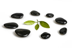 Green leaf and  Black Pebbles. Green leaf and Black pebbles on white background Stock Images