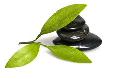 Green leaf and  Black Pebbles. Green leaf and Black pebbles on white background Royalty Free Stock Photography