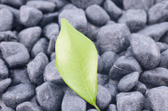 Green leaf on black zen stones Royalty Free Stock Photos