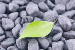 Green leaf on black zen stones Royalty Free Stock Photo