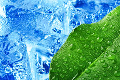 Green leaf with blue ice. Background stock image
