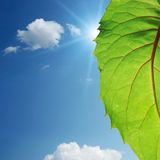 Green leaf on blue sky Stock Image