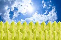 Green leaf and blue sky Royalty Free Stock Image