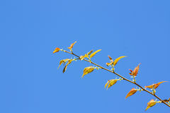 Green leaf on blue sky background Royalty Free Stock Photos