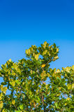 Green leaf and blue sky Royalty Free Stock Images