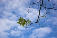 Green leaf with blue sky Stock Photography