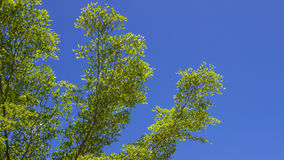 The green leaf on blue sky Royalty Free Stock Photos