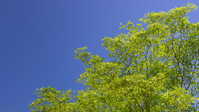 The green leaf on blue sky Stock Photo