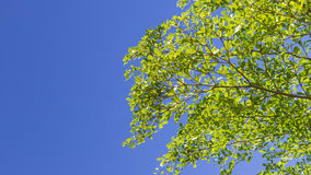 The green leaf on blue sky Royalty Free Stock Images