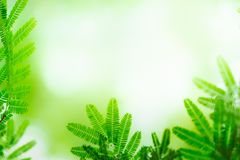 Green leaf on blurred greenery background. Beautiful leaf texture in nature. stock image
