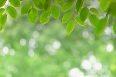 Green leaf on blurred greenery background. Beautiful leaf texture in nature. stock photo