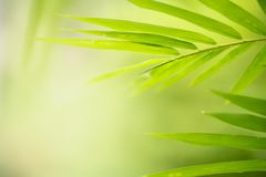 Green leaf on blurred greenery background. royalty free stock photos