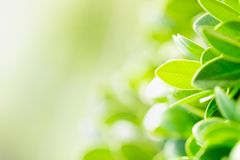 Green leaf on blurred greenery background. Beautiful leaf texture in nature. royalty free stock images