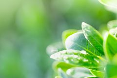 Green leaf on blurred greenery background. Beautiful leaf texture in nature. royalty free stock image