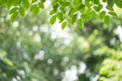 Green leaf on blurred greenery background. Beautiful leaf texture in nature. Natural background. close-up of macro with free space stock images