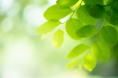 Green leaf on blurred greenery background. royalty free stock photo