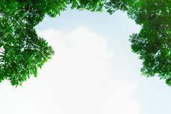 Green leaf on blurred greenery background. royalty free stock images