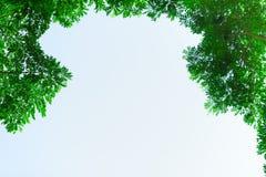 Green leaf on blurred greenery background. stock photo