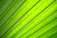Green leaf on blurred greenery background. stock photos
