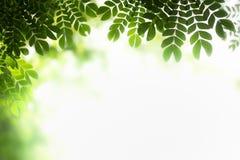 Green leaf on blurred greenery background. stock image