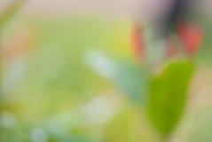 Green Leaf Bokeh Blur Stock Image
