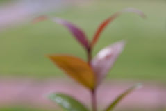 Green leaf bokeh blur Royalty Free Stock Photography