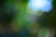 Green leaf bokeh blur Stock Images