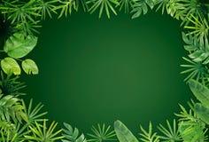 Green leaf border background stock image