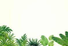 Green leaf border background royalty free stock photo