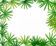 Green leaf border background stock photos