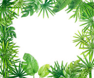 Green leaf border background. Green leaf border on white background royalty free stock photos