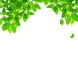 Green leaf border design. On white background Stock Photos