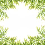 Green leaf border frame for background. Abstract branch greenery botanical isolated spring pattern white plant environment clean air fresh garden park space royalty free illustration