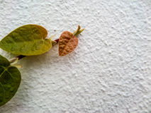 Green leaf border, Isolate of plant on the wall Stock Images