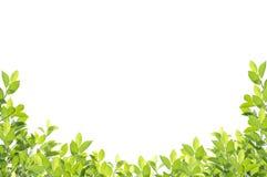 Green leaf border isolated on white background. Royalty Free Stock Photo