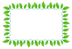 Green Leaf Border Stock Photo