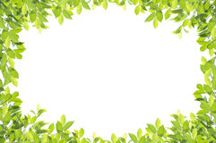 Green leaf border  on white background. Clipping paths included Royalty Free Stock Image