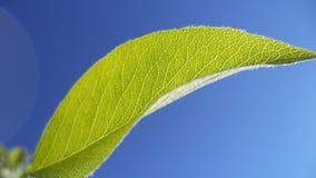 Green leaf. Leaf, botanical, grass, nature color, dew, flower, spring, spring, bright, green, summer, fresh, macro Stock Image