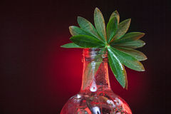 Green leaf in a bottle Stock Photos