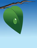 Green leaf on branch. Vector illustration royalty free illustration