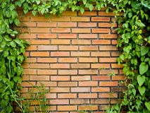 Green leaf and brick wall background Royalty Free Stock Photos