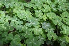 Green leaf bush Stock Images