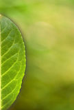 Green leaf card with space. Green leaf on green natural background - useful as card background Stock Photography